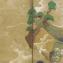 En longeant la mer de Kyôto à Kamakura [Kaidô-ki]